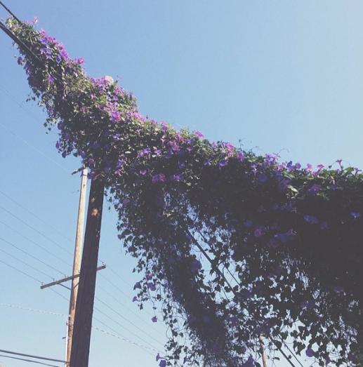 Los-Angeles-Spring-Flowers