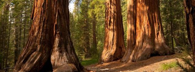 sequoia-national-park