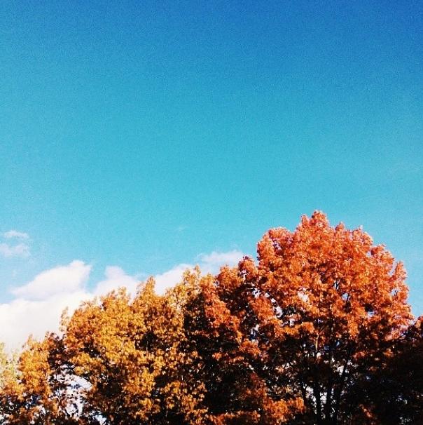 fall-jay-jasinski